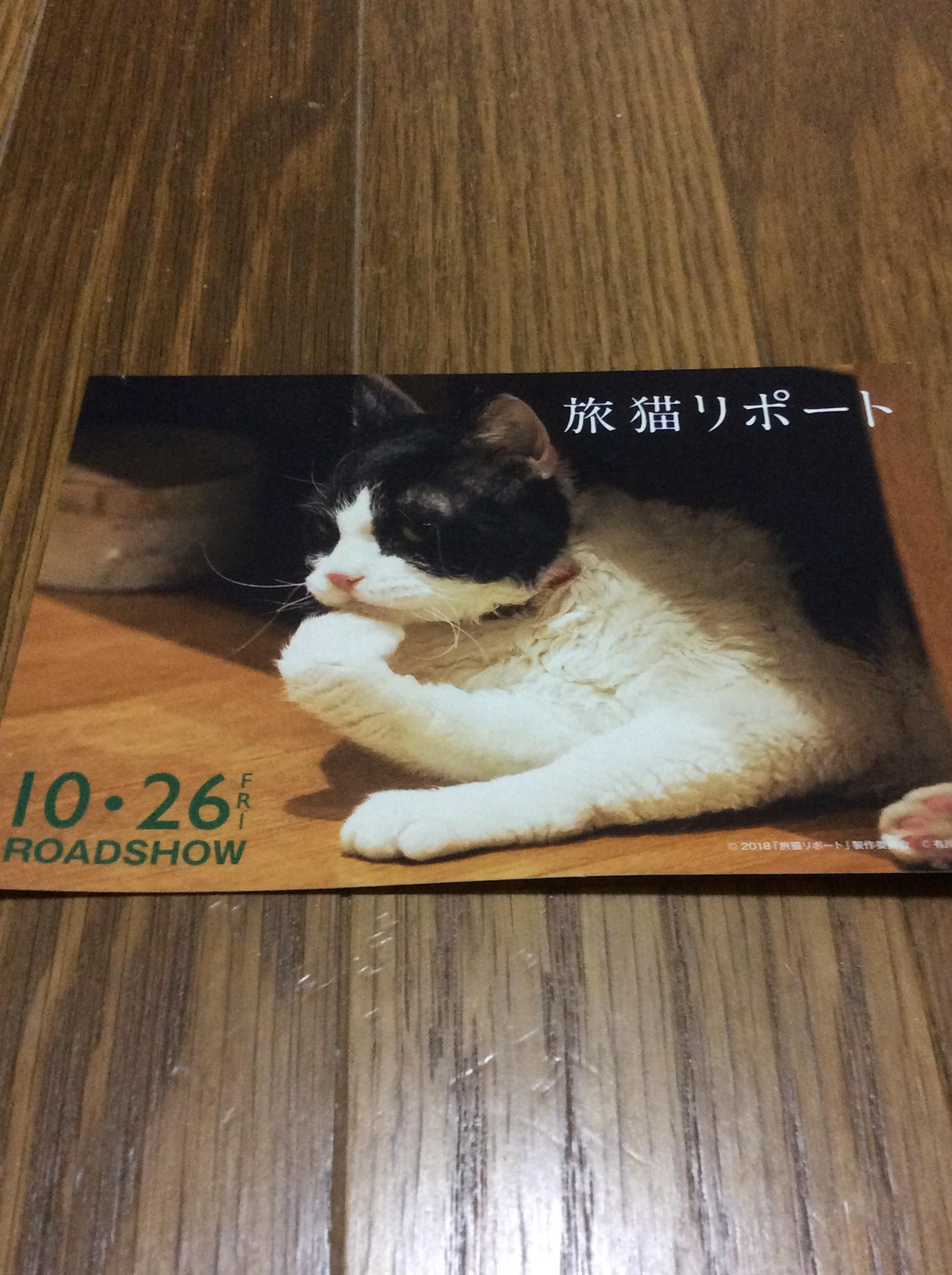 猫 旅 リポート あらすじ